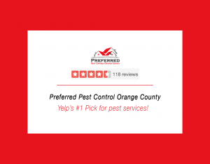 preferred pest review
