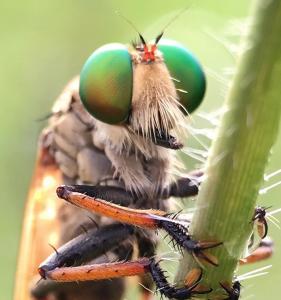 Ant removal in Santa Ana - Preferred Pest Control
