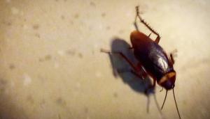 roaches Orange County