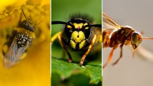 bee, hornet, wasp