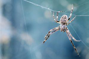 creepy critter spider