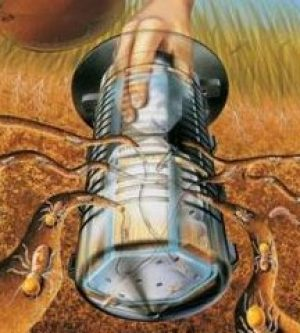 How to Kill Termites
