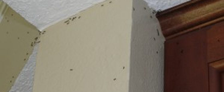 Mid Summer Ant Problems in Orange County