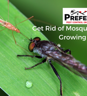 Get Rid of Mosquitoes & Flies by Growing Plants!