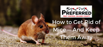 How to Get Rid of Mice — And Keep Them Away