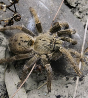 Spiders: The Truth About Mating Habits
