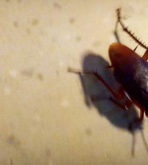 3 Steps to Remove Unwanted Roaches in Orange County