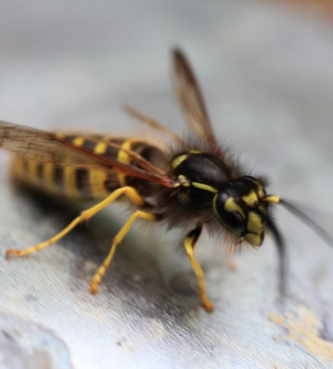 How to Prevent Wasps from Invading Your Home