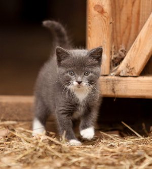 No Kitten Around: What You Need to Know about Rodent Control