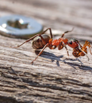 Fall Pests: Ant Infestations in Orange County