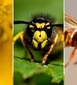 Bees, Wasps, and Hornets, Oh My – Know the Differences and When to Act