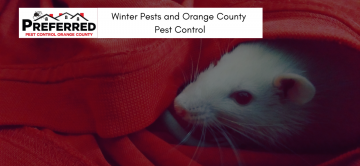Winter Pests and Orange County Pest Control