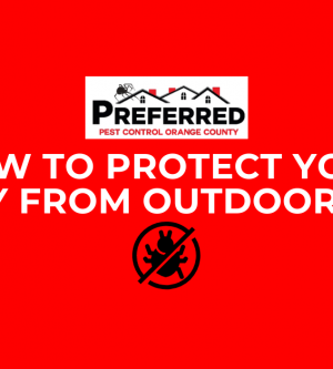 How To Protect Your Family From Outdoor Pests