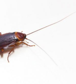American Roaches Love Moist, Warm Weather