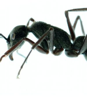 Ants: Picnics and Parties