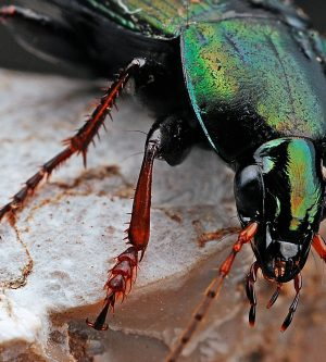 Why Beetles Enter Your Home In Winter – And What To Do About It