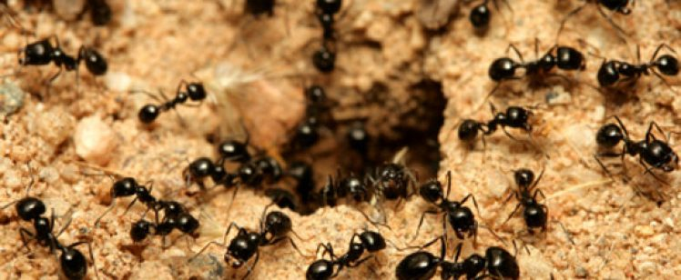 Ants in the Summer – Help!!!