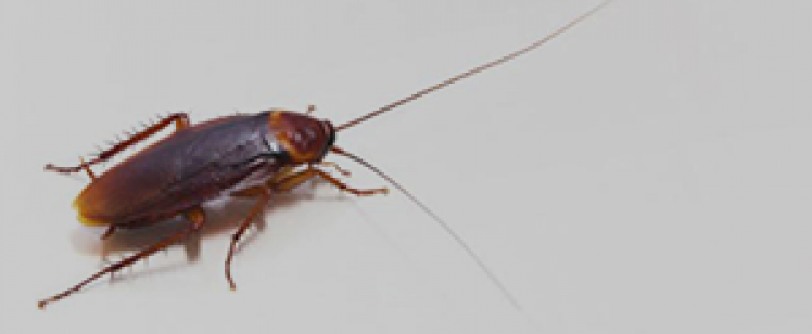 Bed Bug Exterminator Orange County Ca