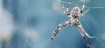 Trust the Professionals to Get Rid of Spiders in Your Home