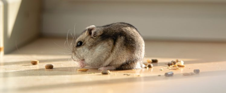 Getting Rid of Rodents in 2020