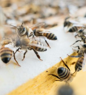 Are Bees a Problem at Your Southern California Home?