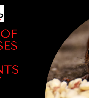 Diseases that RODENTS Carry – Preferred Pest Control OC