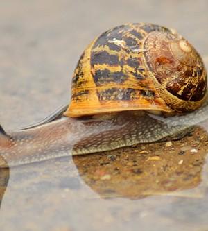 Snails Taking Over Your OC Garden