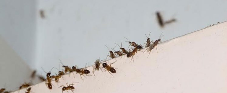 Be Ant-Free this Summer in Orange County