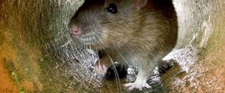 Rodents Seek Shelter from Cold Nights and Rainy Season