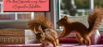 Are There Squirrels in my Home? 5 Signs of an Infestation