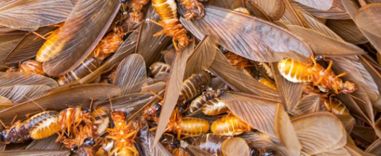 Termite Tenting services and Home Fumigation in Orange County